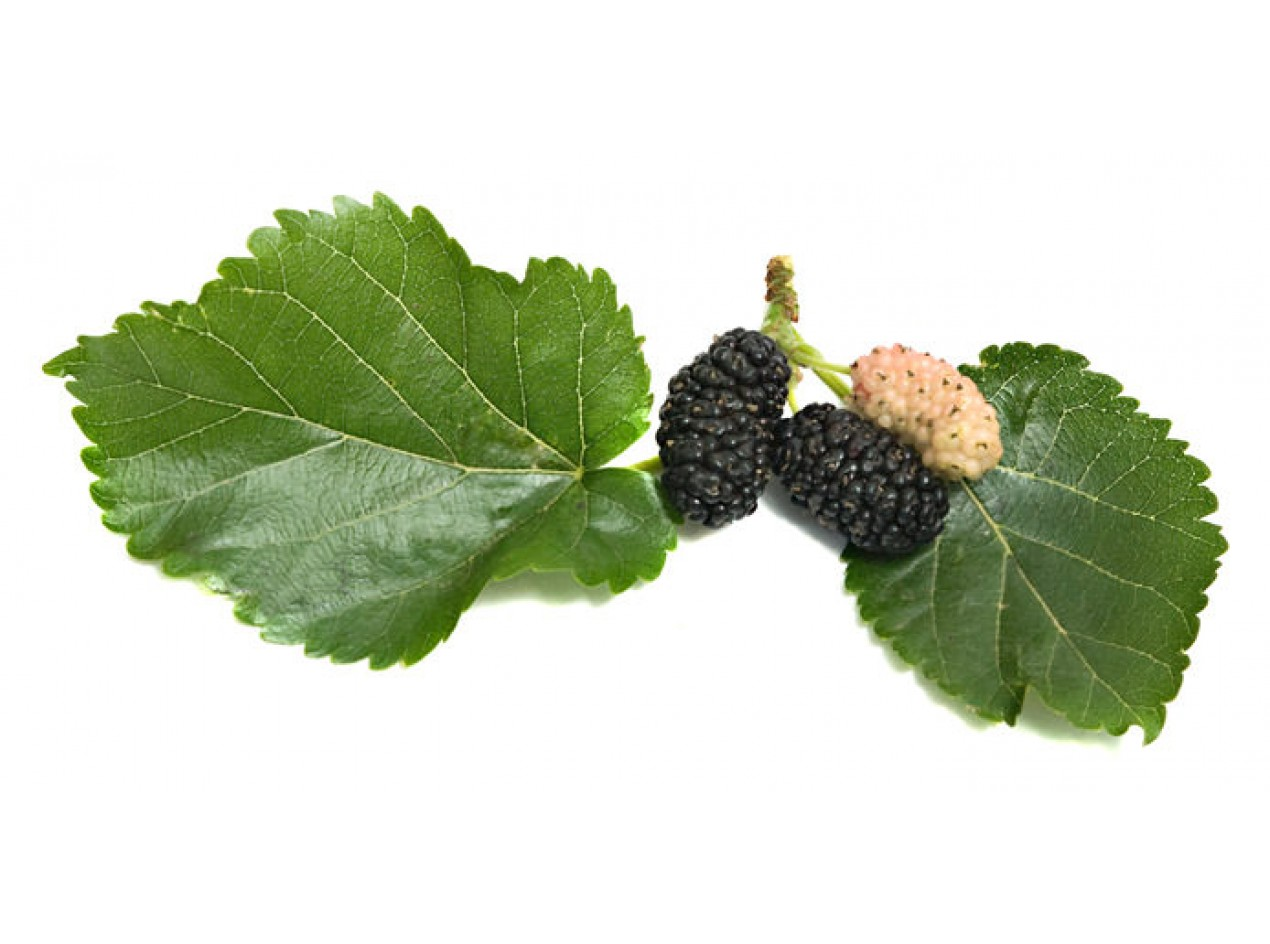 Black Mulberry