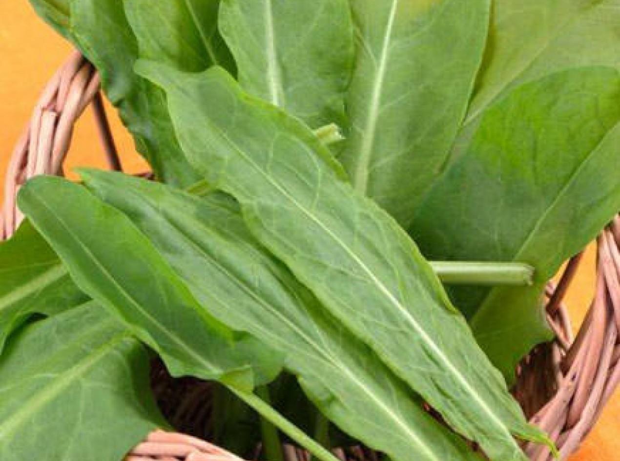 Broad Leaved Sorrel Seeds