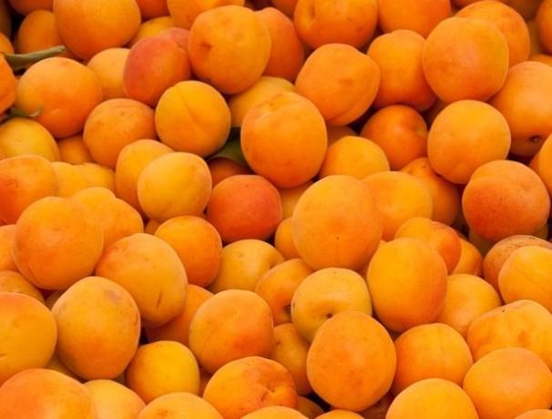 Manchurian Apricot