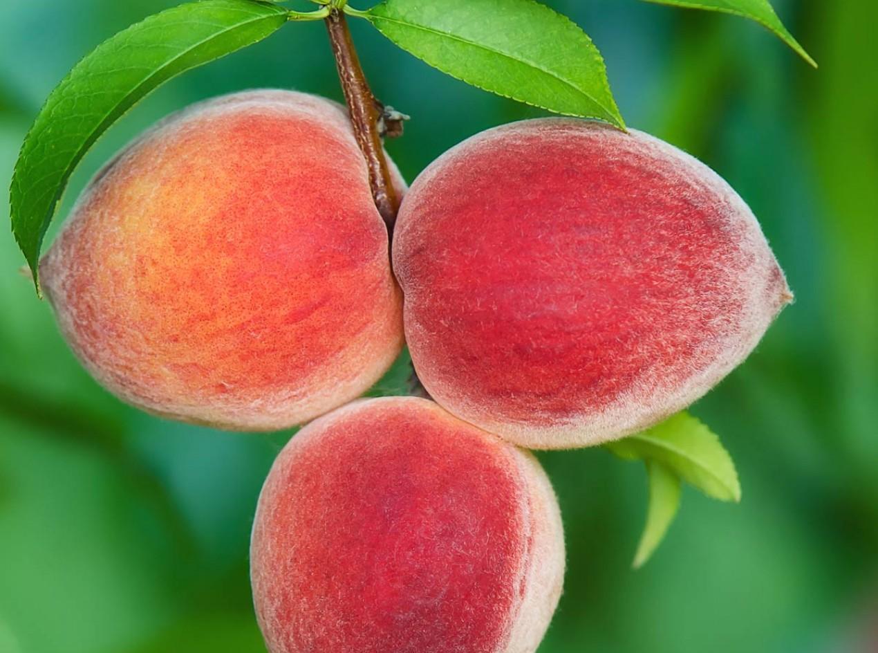 Mackinaw Peach