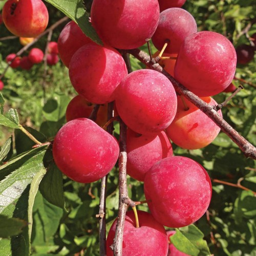 Products - OIKOS Tree Crops