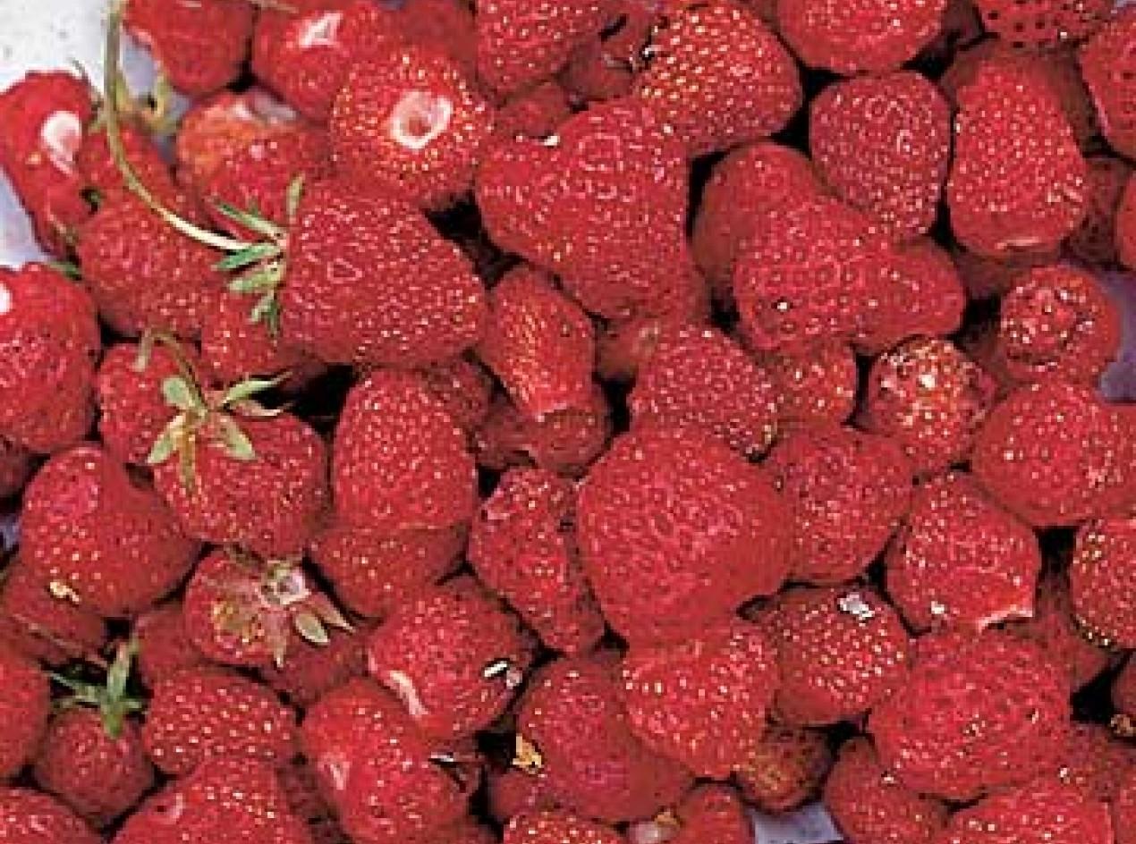 Intensity Strawberry