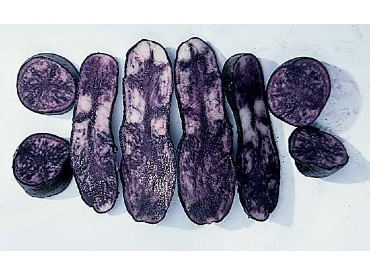ECOS Purple Potato