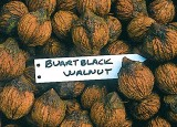 Buartblack Walnut