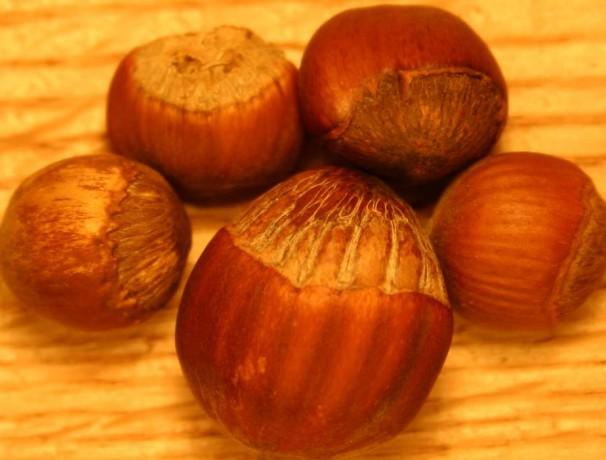 Winkler American Hazelnut