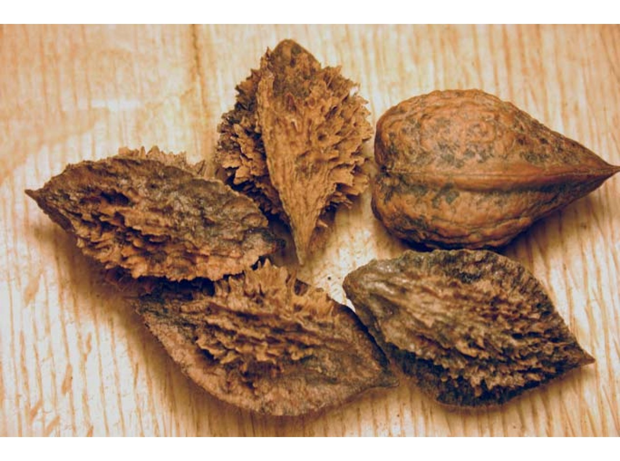 Buartnut Walnut