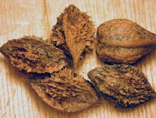 Buartnut Walnut
