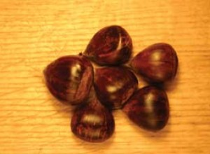 Chinquapin Hybrid Chestnut