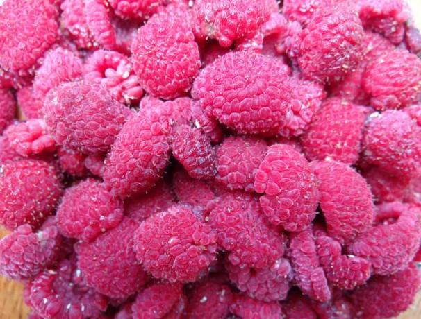 Pink Thimbleberry