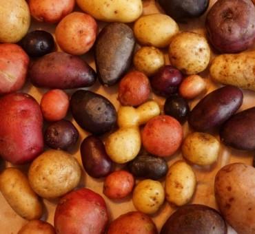 Perennial Diversity Perpetual Potato Seeds