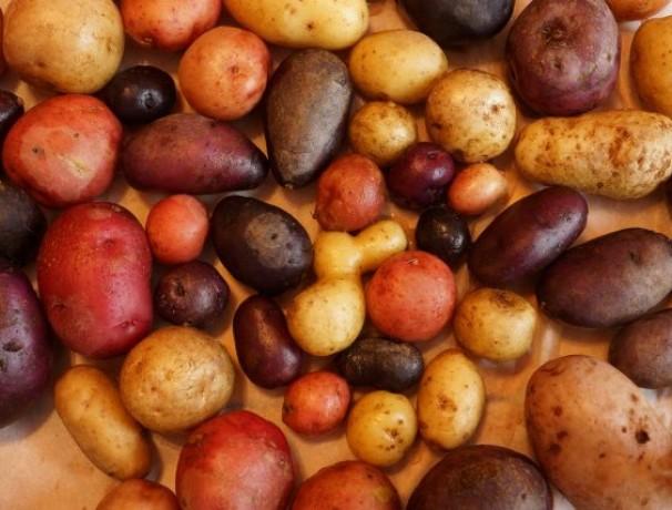 Perennial Diversity Perpetual Potato