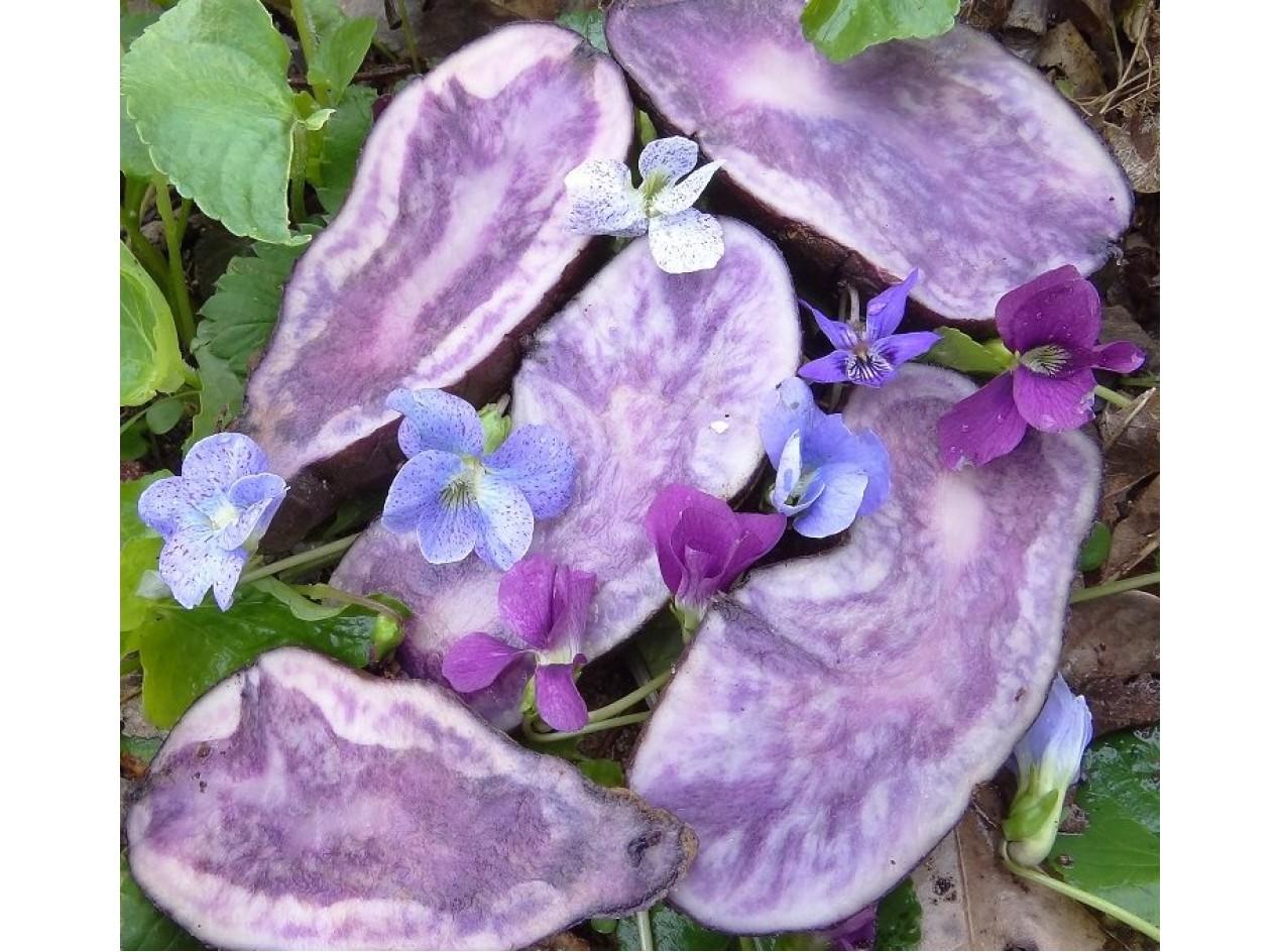 Violets Small Potato