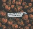 Buartblack Walnut Seeds