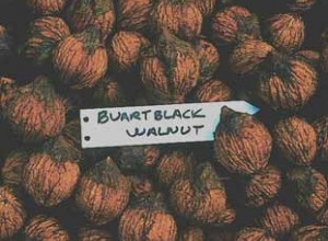 Buartblack Walnut Seeds