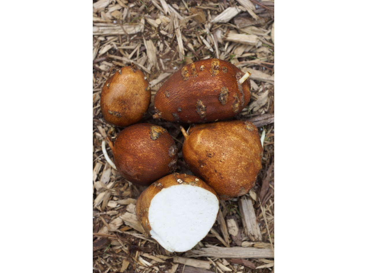 Nutty #3 Groundnut