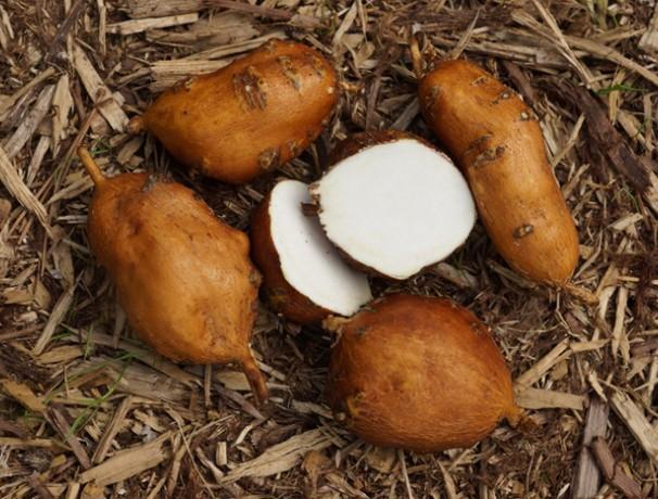 Nutty #2 Groundnut