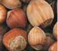 Ken's Select Hazelnut