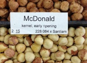 McDonald Hazelnut