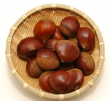 Japanese Chestnut