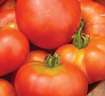 Sibirski Skorospely Tomato