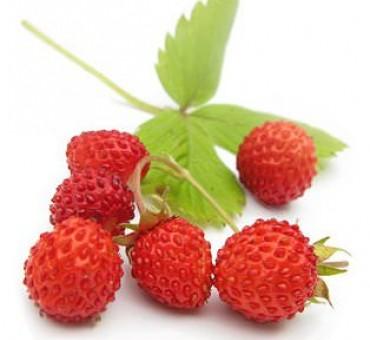 Ali Baba Strawberry